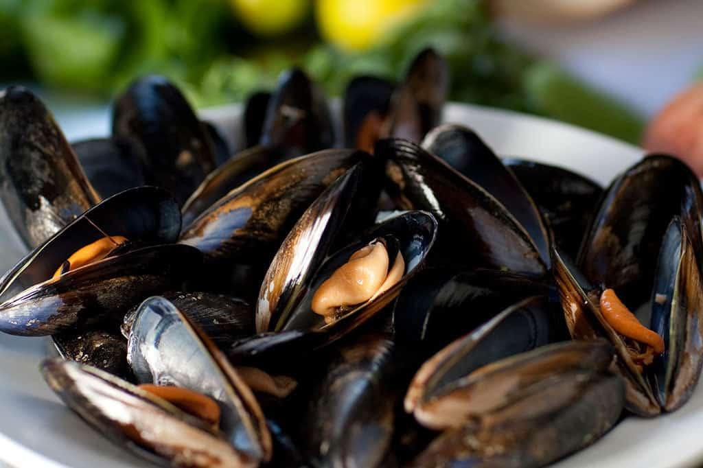 1024x682-Mussels-01