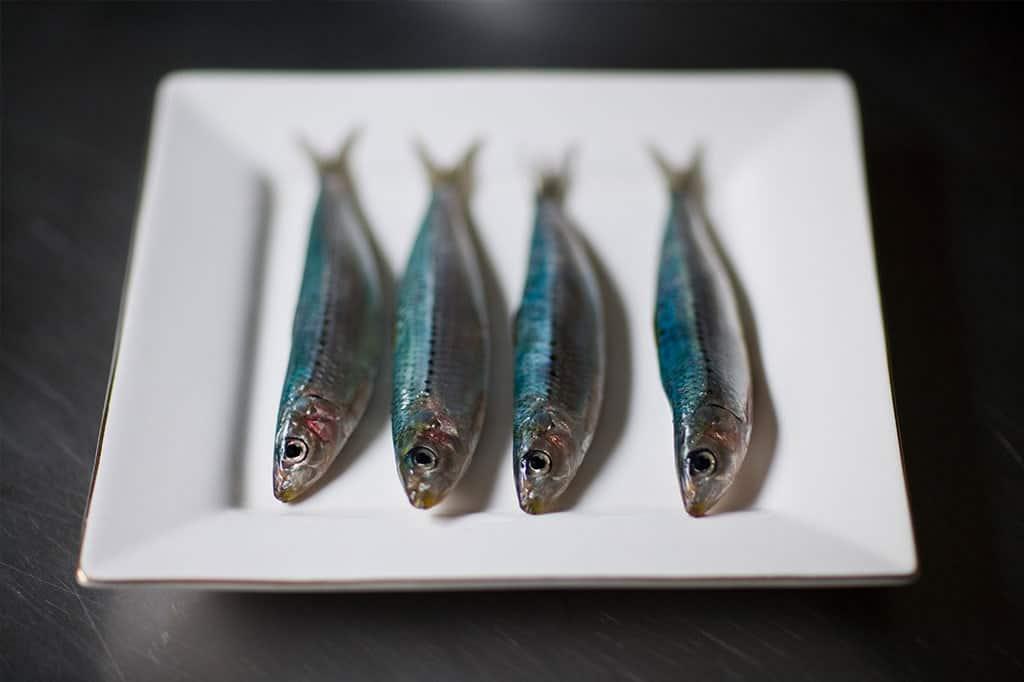 1024x682-Sardines-01